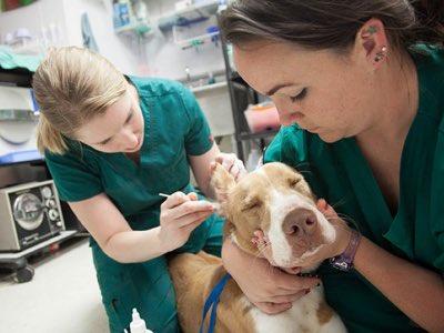 maladies communes chien