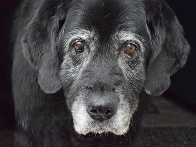 age reel de votre chien