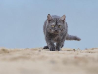 chat adapter au bord de mer