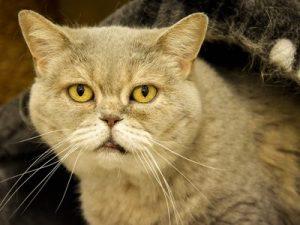 Estimer les frais vétérinaires d'un vieux chat