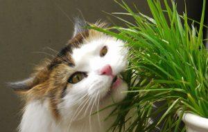 Gastro-enterite chez le chat, tout savoir avec le Mammouth Dechaine