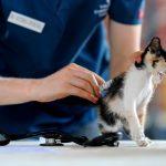 Typhus ou panleucopénie du chat