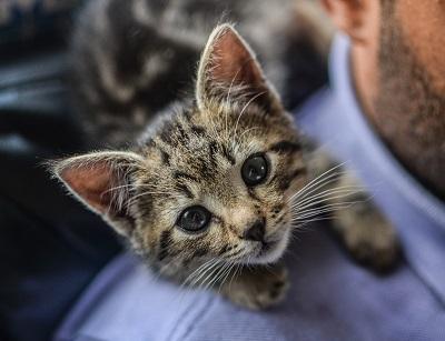 Vacciner son chaton ou son chat