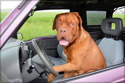 Loi sur les chiens, ce qu'il faut savoir