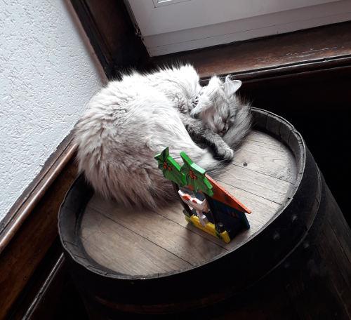 chat ayant survécu au cancer