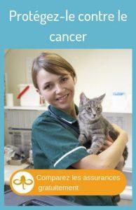 Comparer les assurances pour le cancer du chat