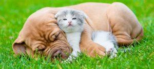 Le Mammouth dechaine comparateur assurance animaux chien chat