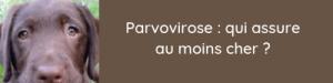 assurance parvovirose chien