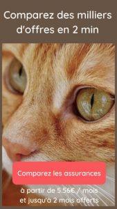 comparer les assurances pour chats