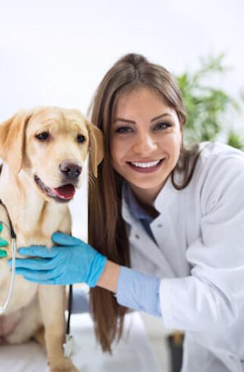 tout comprendre sur l'assurance pour chien
