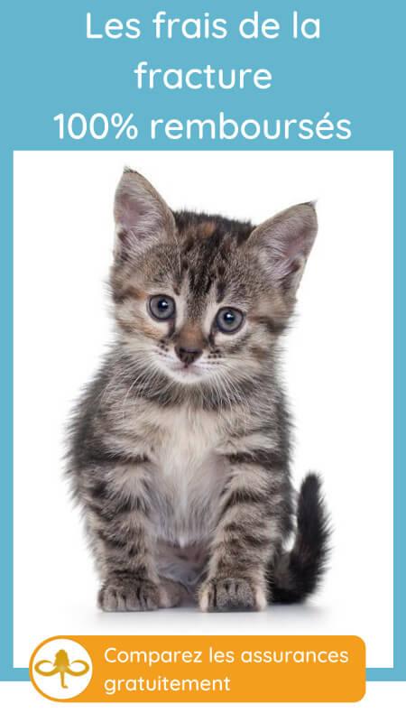 comparer les assurances chat pour les frais vétérinaires la patte cassée