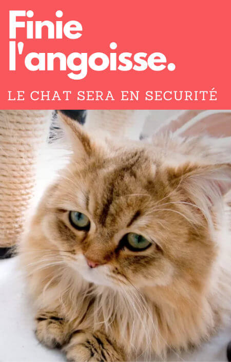 bienfaits de la vaccination du chat