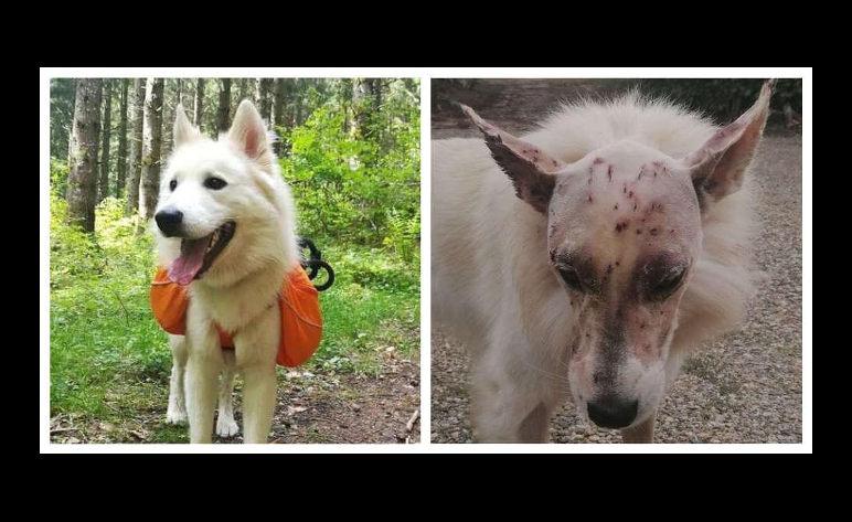 chien blessé sans infection